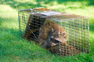 Why You Should Use A Qualified Wildlife Control Service