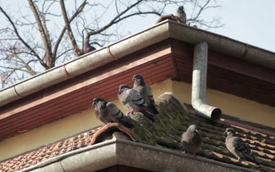 How To Thwart The Unwanted Bird Flocks Away?